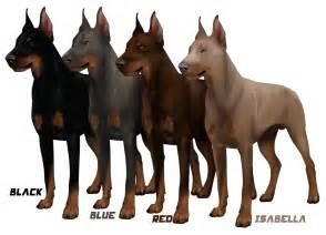 picture of a mix doberman pinscher dog breeds picture