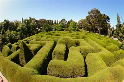lavender maze ashcombe maze and lavender gardens go beyond melbourne