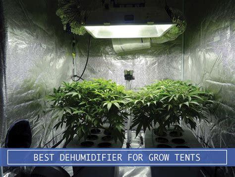 dehumidifier  grow tents  plants review  amazon