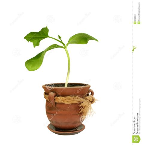 small plant small plant in a clay pot stock photo image of freshness