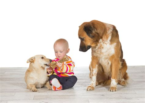how to your to like other dogs the trainer how to deal with jealous dogs trainer and tips