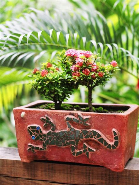 tiny plants how to decorate with miniature roses hgtv