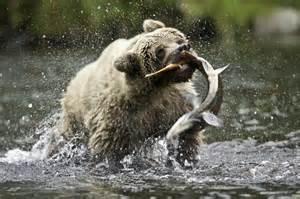 Alaska Zoo Lights 30 Amazing Wildlife Photos Stockvault Net Blog