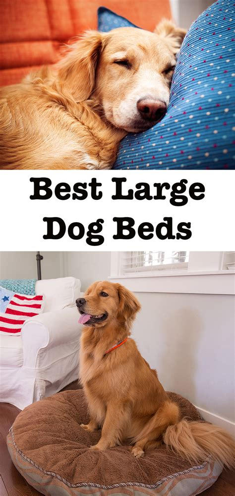 best dog bed for large dogs the best large dog beds for big breeds or doggy families