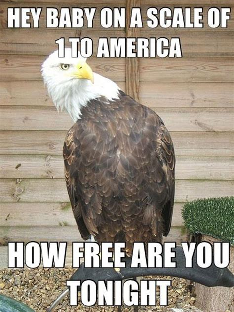 Funny Eagles Memes - eagle meme funny pictures quotes memes jokes
