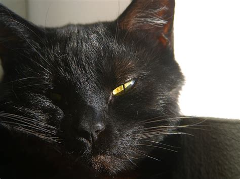 Finget Squishy Sleeping Cat 4 holy cats even the zestimate is only 112 000