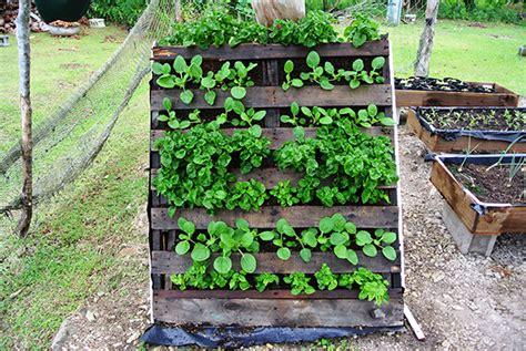 Chicken Root Vegetables - training on urban vegetable gardening methods