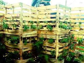 ideas and inspiration for a modern vegetable garden sow