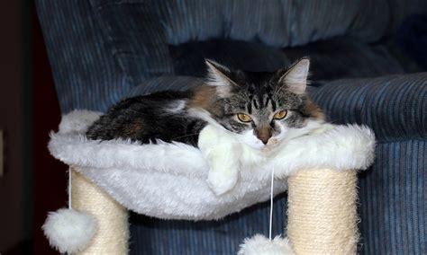 Amaca Per Gatti Amaca Per Gatti Come Orientarsi Il Mio Gatto 232 Leggenda