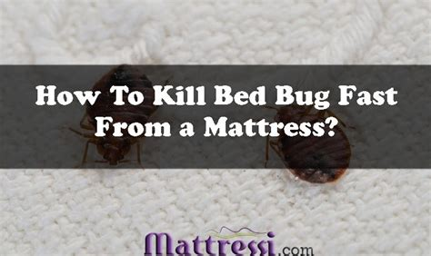 How To Kill Bed Bugs Fast by Posts Mattressi