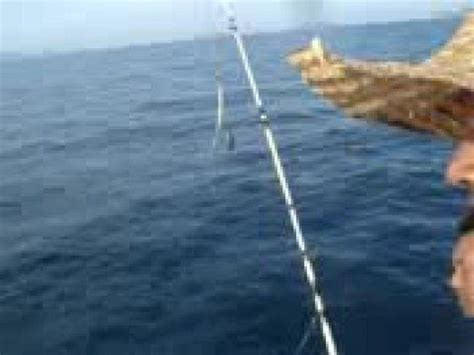 Pancing Di Laut Jigging Kerapu Di Pulau Jarak Doovi