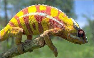 lizards that change colors twohig science kruszj