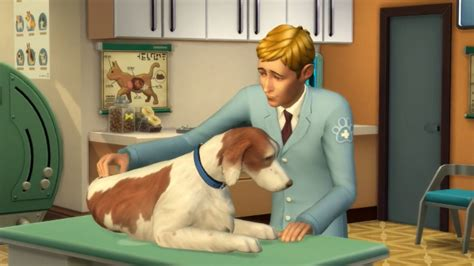 sims 4 cats and dogs cheats sims 4 veterinarian how to start the vet career in cats dogs gamerevolution