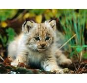 Beautiful Animal Photos  HD Wallpapers Pulse