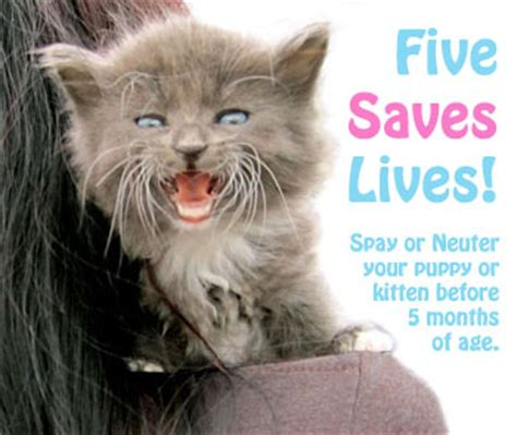 age to spay a what is the best age to spay or neuter 187 adoptapet
