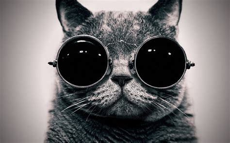 wallpaper cat with sunglasses cat in the glasses wallpapers and images wallpapers