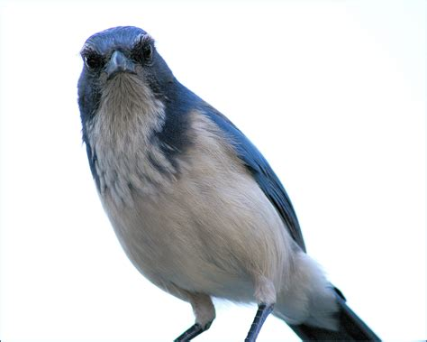 the last word on nothing on anglerfish scrub jays and