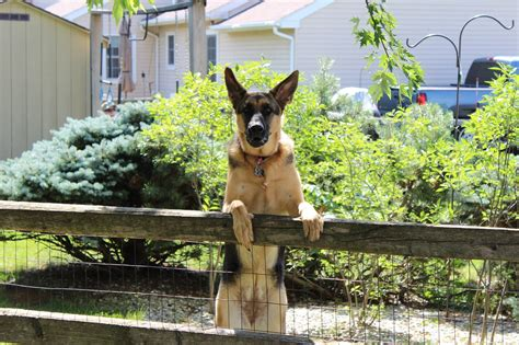 underground fence reviews best invisible fence for german shepherd fence reviews