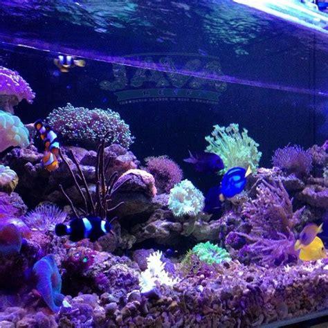pembuatan aquarium air laut  apartemen  jakarta