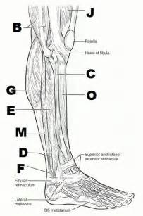 anatomy and physiology coloring workbook answers chapter 11 you searched for anatomy and physiology coloring workbook