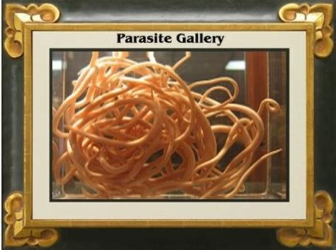 Parasite Detox Time At Age 38 by 38 Best Parasites Images On Parasite Cleanse