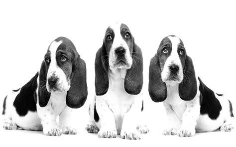 Longsleeve Hush Puppies hush puppies photograph by sumit mehndiratta