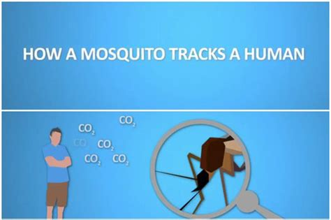 Kite Mosquito Sticker