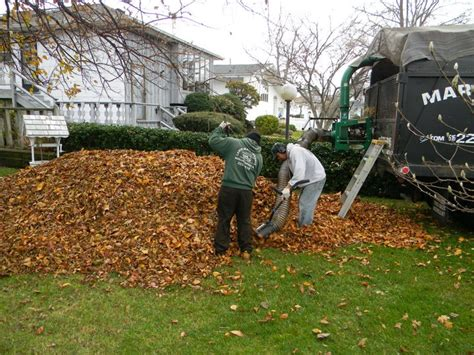 backyard cleanup services landscaping lawn service landscaping lawn services