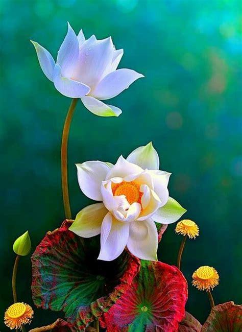 imagenes rosas muy hermosas las 25 mejores ideas sobre hermosas flores en pinterest y