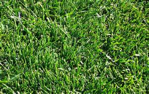 arco lawn equipment overview types of grass