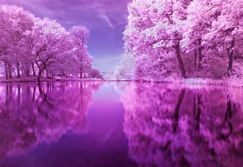pink and purple tree untitled colour the w0rld