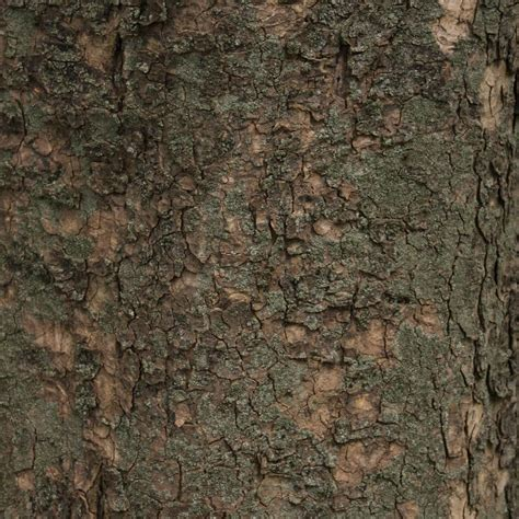 Wallpaper Pohon Coklat | lumut lumut pohon coklat hijau wallpaper sc ipad tablet