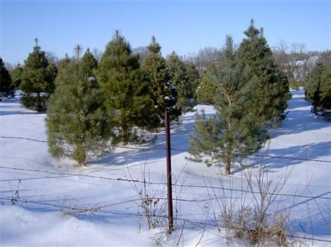 9 magical christmas tree farms to visit in kansas this