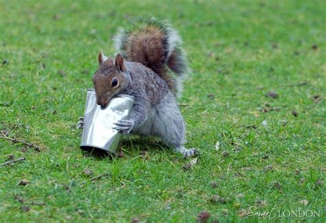 animals chewing wires 1000 images about animals chipmunks squirrels on ontario letter to santa and