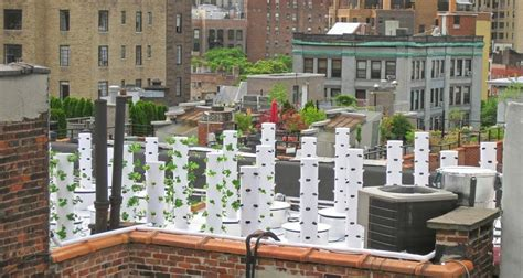 Bell Book And Candle Restaurant Rooftop Garden by 10 Farms Transforming City Rooftops