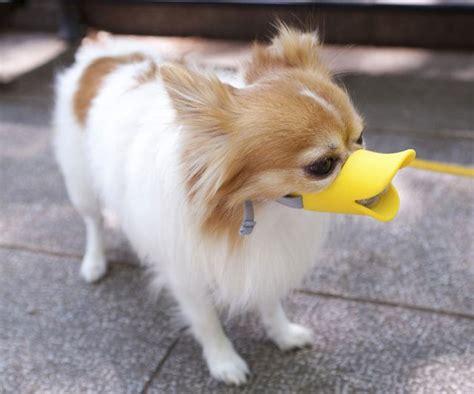 puppy muzzle duckface muzzle dudeiwantthat