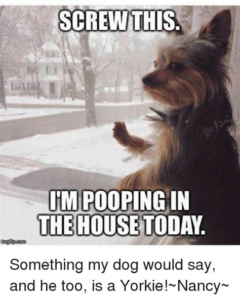 my dog keeps pooping in the house pooping in the house 28 images i m pooping inside today humour my keeps pooping