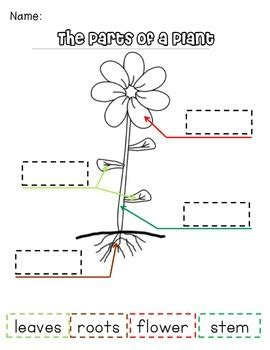 Label Parts Of A Plant For Earth Day Spring 3 Differentiated Templates Plant Label Template