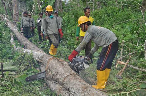 Gergaji Mesin Tebang Pohon penebangan pohon secara liar