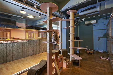 petaholic hotel sms design archdaily