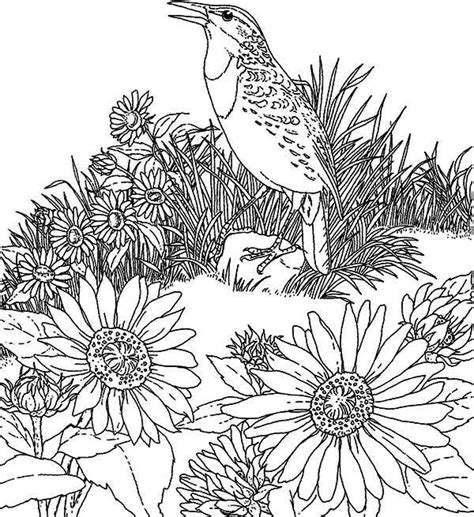 Sunflower Garden Coloring Page   sunflower garden page coloring pages