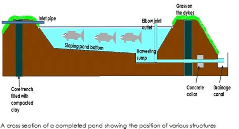 catfish hatchery layout earth pond design and construction nafis