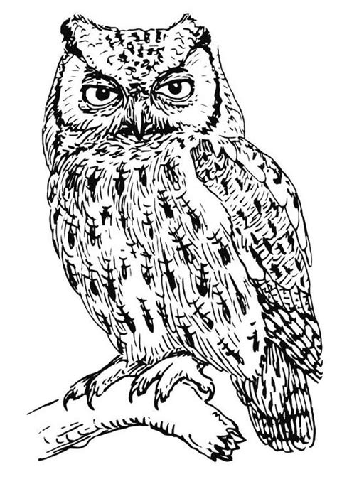 realistic owl coloring page owl on tree coloring pages coloringstar