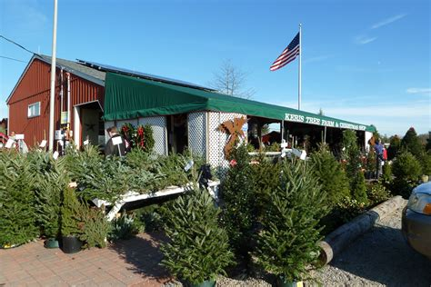christmas tree farms allentown pa keris tree farm shop allentown nj shop