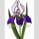 iris-flower-clipart-iris_flower_royalty_free_080731-036745-247042.jpg