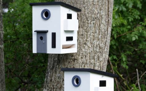 casette per uccelli da giardino 10 casette per uccelli da giardino animali pucciosi