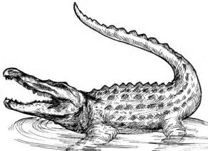 Realistic Alligator And Crocodile Coloring Pages sketch template