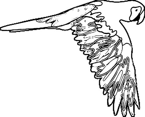 parrot coloring page parrot coloring pages wecoloringpage