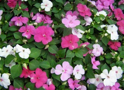 piante di vetro fiori pianta di vetro pollicegreen