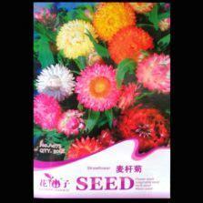Bibit Benih Seeds Adenium Arabicum Cocok Untuk Daerah Panas benih marigold mixed 15 biji panah merah bibitbunga